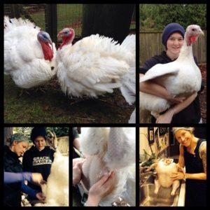 turkey-collage1